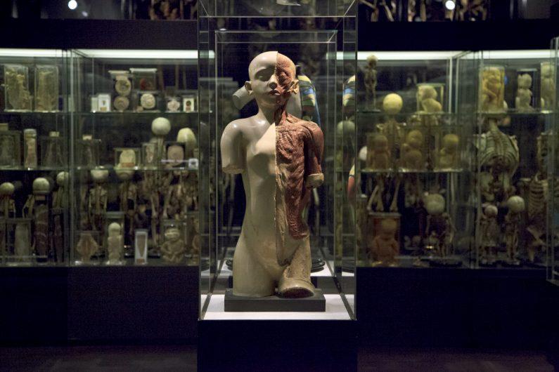 muzej vrolik